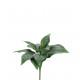 Hosta plante, branches x11, longueur 24cm, vert